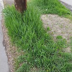 Long Grass - Along Major Roadway at 1001 8 AV SW