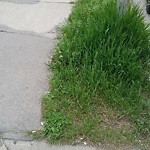 Long Grass - Along Major Roadway at 1002 11 AV SW