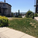 Irrigation Concern - Within a Park at 85 TUSCANY MEADOWS CM NW