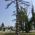 City Owned Tree Concern at 1219 DANLOE ST NE