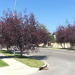 City Owned Tree Concern at 7874 WENTWORTH DR SW