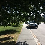 City Owned Tree Concern at 2534 2 AV NW