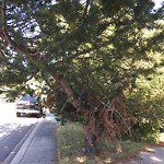 City Owned Tree Concern at 1504 CAVANAUGH PL NW