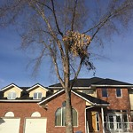 City Owned Tree Concern at 322 SCIMITAR BA NW