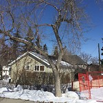 City Owned Tree Concern at 2234 27 AV SW
