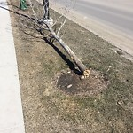 City Owned Tree Concern at 767 MAHOGANY BV SE
