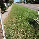 Long Grass - On a Residential Centre Median at 3407 3 AV NW