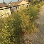 Long Grass - In a Park at 223 PANAMOUNT HL NW