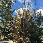 City Owned Tree Concern at 39 EAGLE RIDGE PL SW