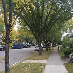City Owned Tree Concern at 1170 PRESTWICK CI SE