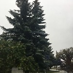 City Owned Tree Concern at 3620 KILKENNY RD SW