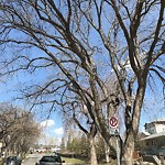 City Owned Tree Concern at 2432 CRESTWOOD RD SE
