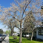 Tree Maintenance - City Owned at 1023 THORNEYCROFT DR NW