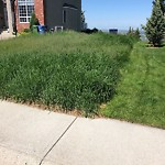 Mowing - Median - in a Residential Community at 151 HAMPTONS TC NW