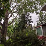 Tree Maintenance - City Owned at 45 Butler Cr NW