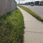Mowing - Major Roadway 60+km/h & Damage to any City Boulevard at 125 Cougartown Ci SW