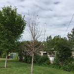 Tree Maintenance - City Owned at 332 42 Av SW