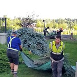 Tree Maintenance - City Owned at 800 1 Av SW