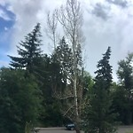 Tree Maintenance - City Owned at 2223 12 St SW Upper Mount Royal