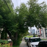 Tree Maintenance - City Owned at 52 6 St NE