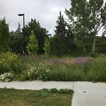 Mowing - Within a Park at 824 Mcdougall Rd NE