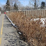 Shrubs, Flowers, Leaves in a Park - Maintenance at 1097 Zoo Rd NE
