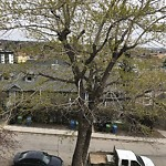 Tree Maintenance - City Owned at 315 3 St NE