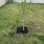 Parks - Branching Out Tree Program at 474 Kincora Dr NW