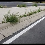 Mowing - Major Roadway 60+km/h & Damage to any City Boulevard at 8 Cityscape Bv NE